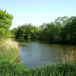 野池のバス釣りならこんなルアーがおすすめ!使い方と一緒に徹底解説!