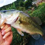 バス釣りで数をたくさん釣る方法を紹介します!初心者さんは必見
