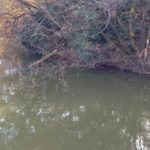 濁りがあるフィールドのバス釣り攻略法を徹底的に解説していきます!