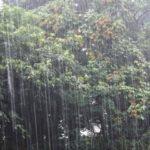 大雨の日でもバスは釣れる?状況とタイミングの見極めが肝心です!